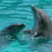 Los delfines adaptaron su esperma para poder reproducirse en el mar. /Pexels