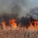 Los vientos secos y las altas temperaturas favorecidas por el cambio climático fomentan el inicio y la propagación de los grandes incendios forestales. / Pixabay