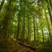 La Tierra está perdiendo masa forestal