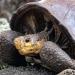 Imagen de la tortuga redescubierta en Galápagos